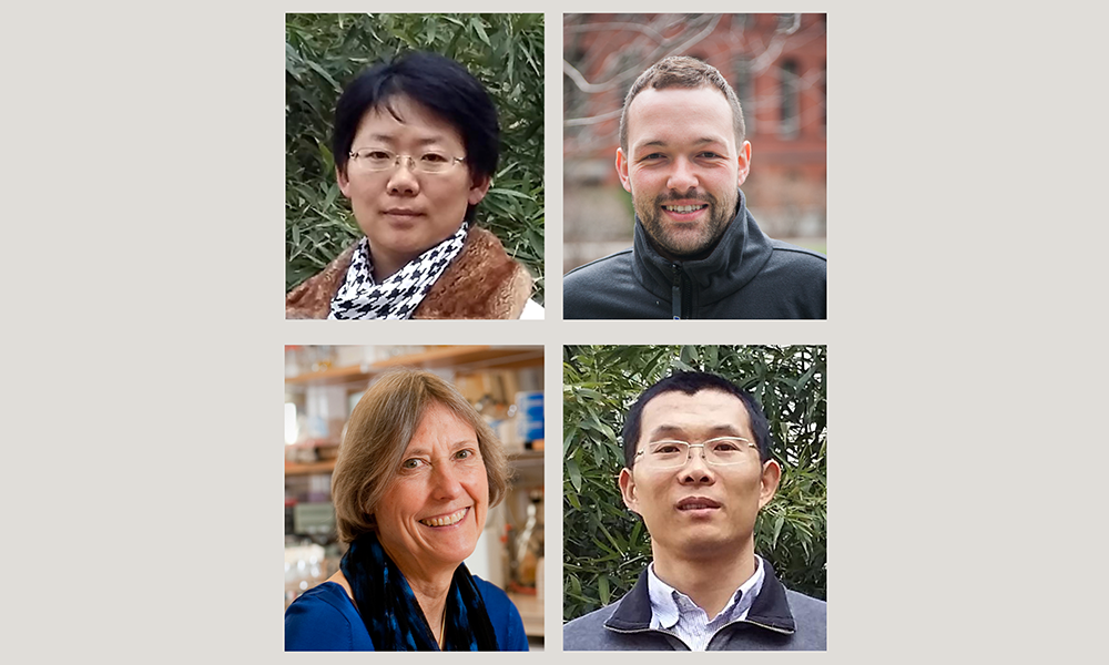 (top l to bottom r) Shunxin Wang, Martin White, Nancy Kleckner, and Liangran Zhang; (not shown) Terry Hassold, Patricia Hunt, and Denise Zickler